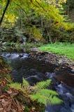 Lasowy jesień krajobraz z wodnym strumieniem, paprociami i drzewami, zdjęcia stock