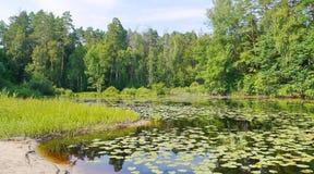 Lasowy jeziorny brzeg Obrazy Stock