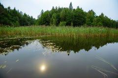 Lasowy jeziorny lasowy piękny Fotografia Royalty Free