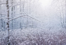 lasowy jeziorny pokojowy sceny zima drewno Zdjęcia Royalty Free