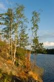 lasowy jeziorny skalisty Obraz Royalty Free