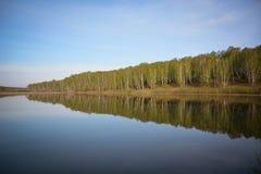Lasowy jeziorny Syberia Altai region obrazy royalty free