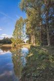 Lasowy jezioro Zdjęcie Stock