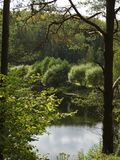 Lasowy jezioro Obraz Royalty Free