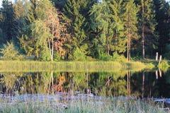 Lasowy jezioro fotografia stock