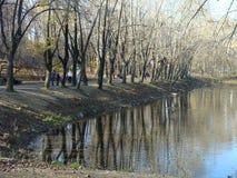 Lasowy jezioro Obrazy Stock