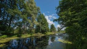 Lasowy jezioro i drzewa niebieska spowodowana pola pełne się chmura dzień zielonych roślin krajobrazu ruchu pokaz mały nie niebo  Fotografia Royalty Free