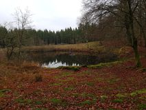 Lasowy jezioro w spadku zdjęcia stock