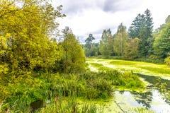 Lasowy jezioro w wczesnej jesieni w Środkowej części Rosja Obrazy Stock