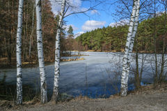 Lasowy jezioro w wiośnie na słonecznym dniu Obraz Stock