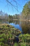 Lasowy jezioro w wiośnie Obrazy Royalty Free