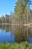Lasowy jezioro w wiośnie Obraz Royalty Free