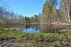 Lasowy jezioro w wiośnie Zdjęcie Stock