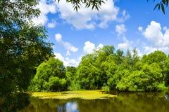 Lasowy jezioro, zakrywający z duckweed roślinami Zdjęcia Royalty Free