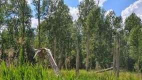 Lasowy krajobrazowy tryb z epopei wroną zdjęcia stock