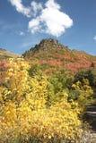 lasowy krajowy uinta Zdjęcia Royalty Free