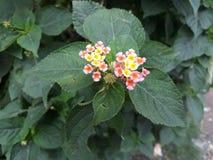 Lasowy kwiat Obraz Stock
