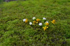 Lasowy kwiat Fotografia Stock