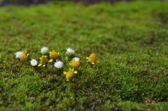 Lasowy kwiat Obraz Royalty Free