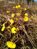 Lasowy kwiat Obrazy Royalty Free