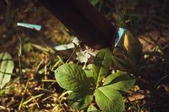 Lasowy kwiat przeciw błyszczącemu ax Obraz Stock