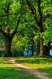 Lasowy ślad Obrazy Stock
