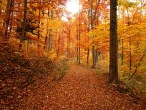 Lasowy ślad Podczas spadku zdjęcia royalty free