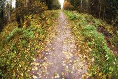 Lasowy ślad w spadków drewnach Zdjęcia Royalty Free