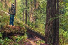 Lasowy śladu wycieczkowicz Zdjęcia Royalty Free