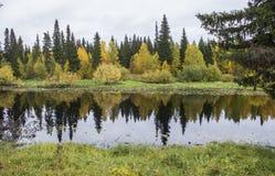Lasowy lustro odbija everything zdjęcie royalty free