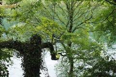 Lasowy mężczyzna Zdjęcie Royalty Free