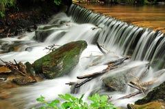 lasowy mały waterfoll Fotografia Stock