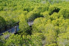 Lasowy mangrowe Obrazy Stock