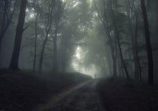 lasowy mgła mężczyzna obraz royalty free
