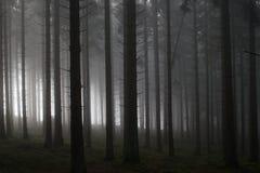 lasowy mglisty ranek Fotografia Stock
