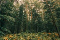 Lasowy miejsce Obrazy Stock