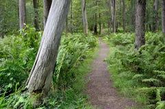 Lasowy natura ślad Zdjęcia Stock