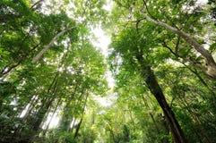 Lasowy nieba patrzeć Obraz Stock