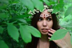 Lasowy obrazek piękna młoda brunetka Europejski pojawienie z ciemnego brązu oczami i wielkimi wargami obraz royalty free