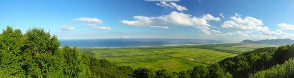 lasowy ocean Obrazy Stock