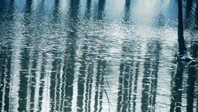 Lasowy odbicie w wodzie, Błyska czochrę, śnieg zdjęcie wideo