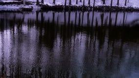 Lasowy odbicie w wodzie, czochra, śnieg zbiory wideo