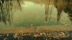 Lasowy odbicie w wodzie, metasequoia urlop unosi się na jeziorze, czochra, jodła zbiory wideo
