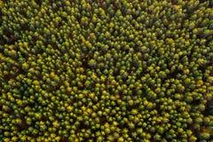 Lasowy odgórny widok Obraz Stock