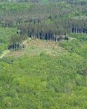 lasowy odgórny widok Zdjęcie Royalty Free