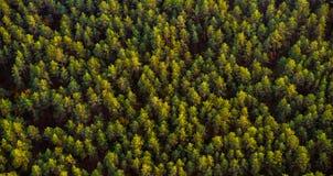 Lasowy odgórny widok Zdjęcia Royalty Free