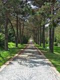 Lasowy odprowadzenie (HDR) zdjęcie royalty free