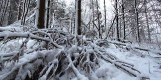 Lasowy opadu śniegu krajobraz Illinois Zdjęcie Royalty Free