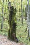 Lasowy opiekun Zdjęcia Royalty Free