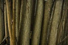 Lasowy orzechowy krzak Obrazy Royalty Free